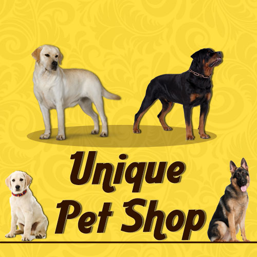 Say It Creative Personalized Shop: Feed Stores / Pet Shops, Others - Karnal